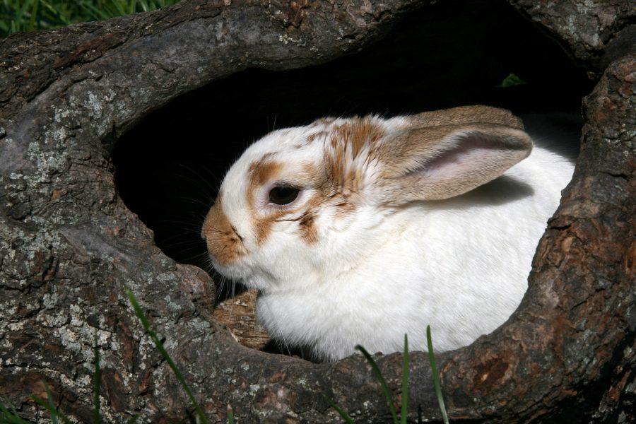 Kaninchenimpftag am 30. März 2021
